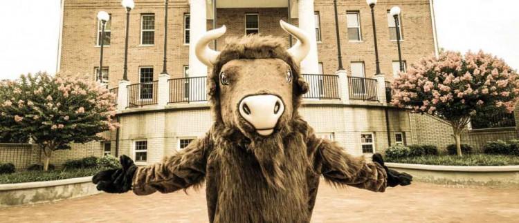 buffalo-1024x441